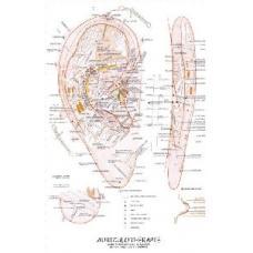 Mapa - Aurikuloterapie - Růžička Radomír Dr.